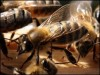 The Economic Value of Honeybees